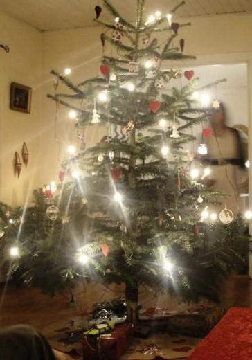Los árboles navideños se cortan en el bosque en Bornholm
