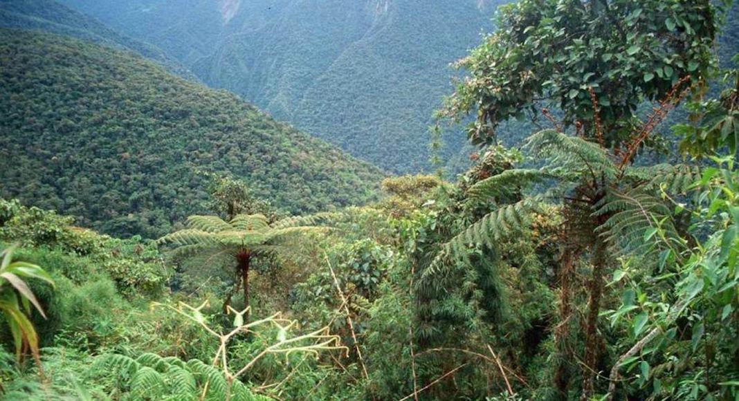 Parques Nacionales del noroeste argentino que deberías visitar