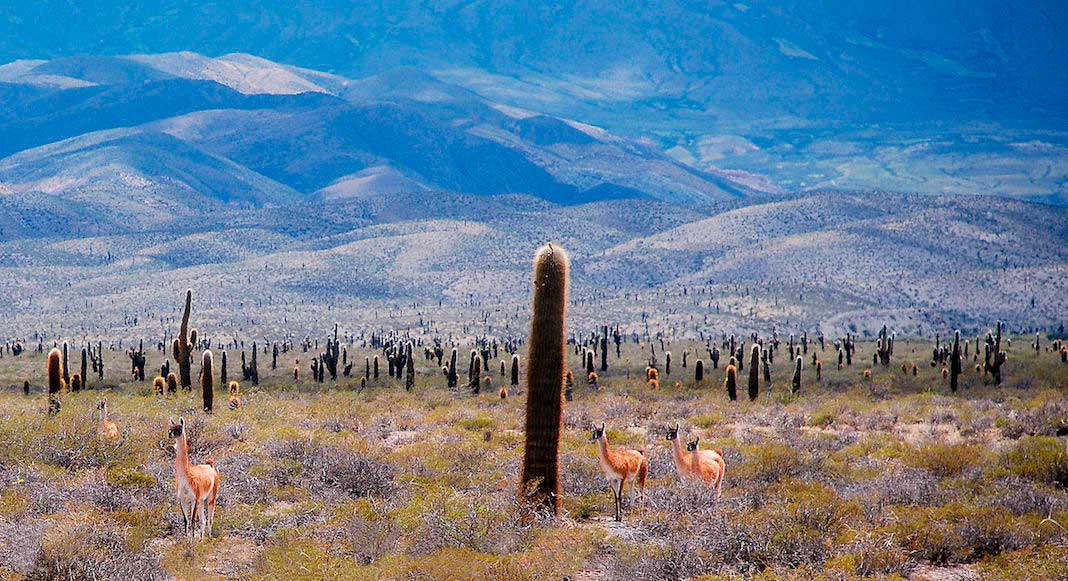 Parques Nacionales del noroeste argentino