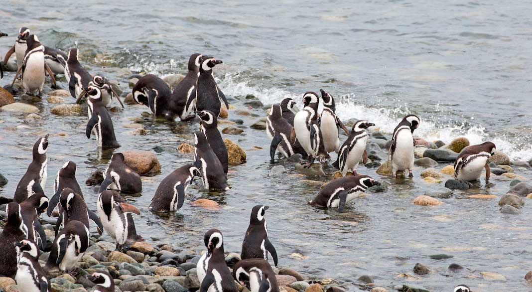 Tips para viajar a Punta Arenas