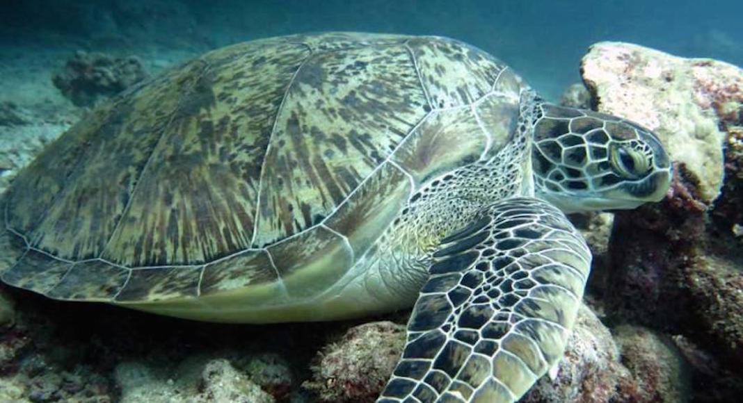 Las tortugas a cuidar