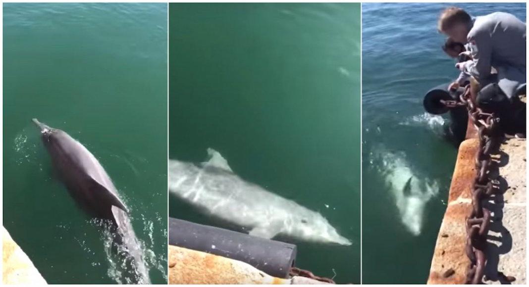 Delfines en el Puerto de Cagliari