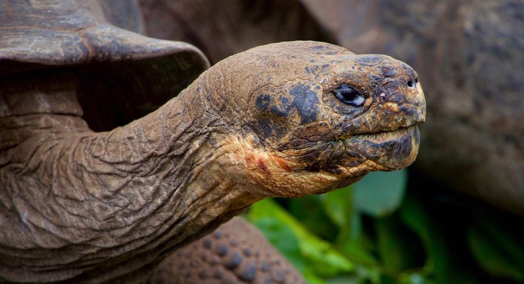 maravillas naturales en extincion