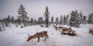 Imperdibles en Finlandia