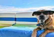 Las mascotas más viajeras del mundo