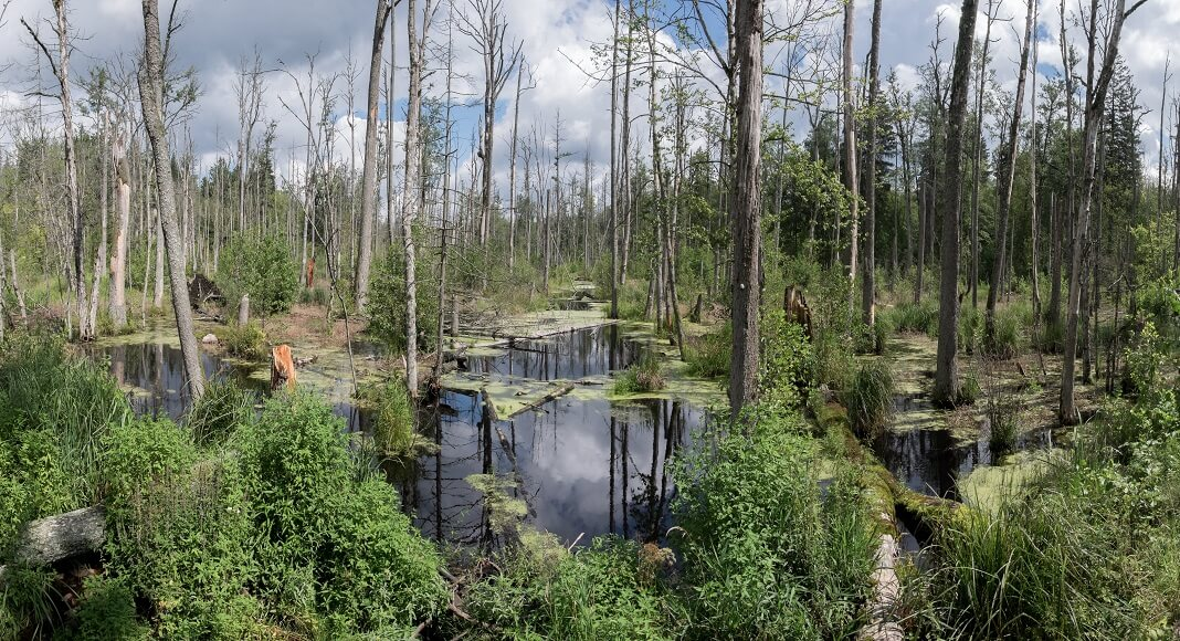 Bosque en Bialowieza