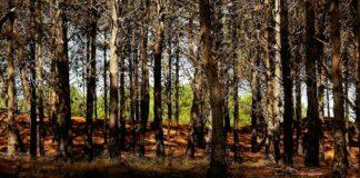 bosque en Mar de las Pampas