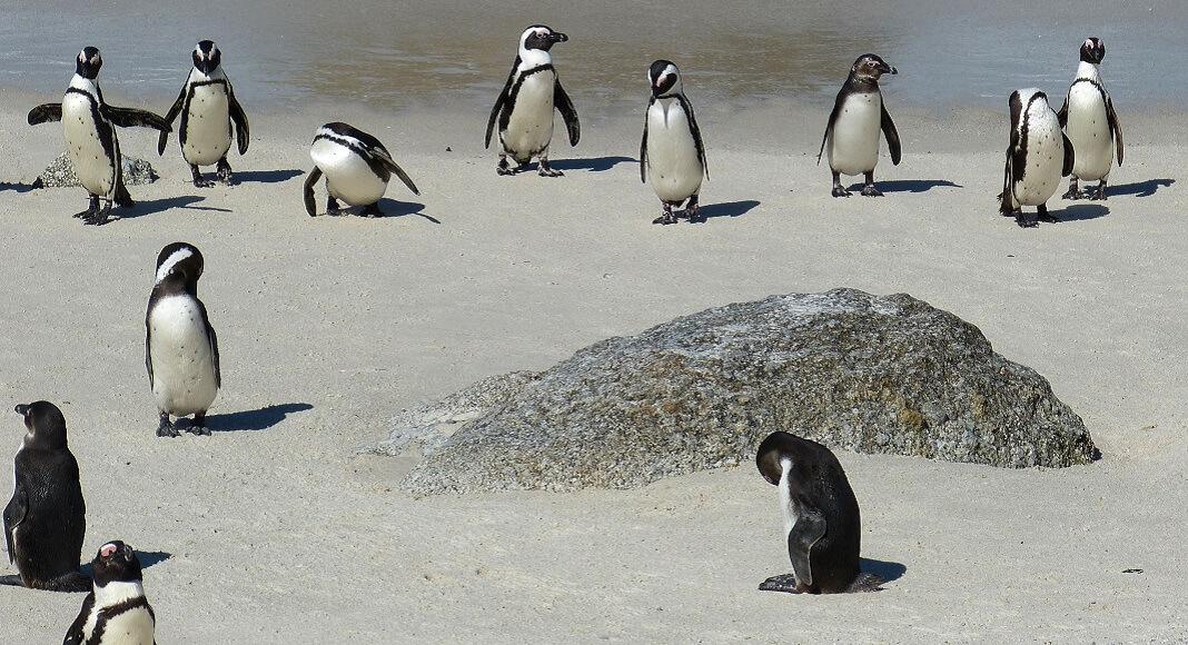 Pingüinos en Cabo Vírgenes