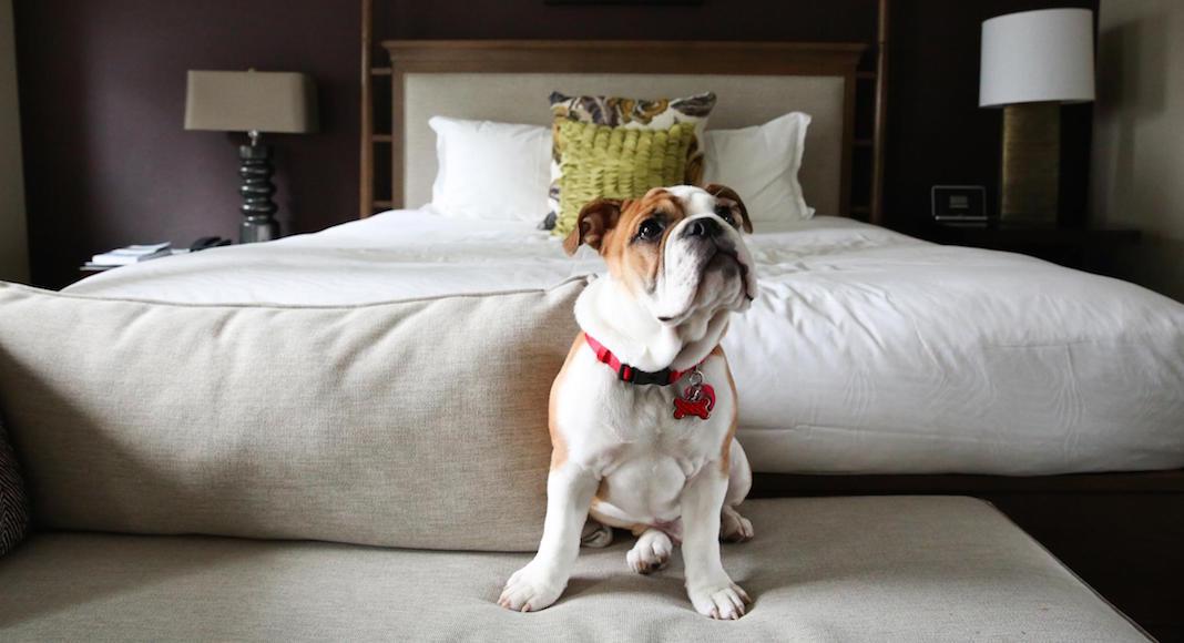 hoteles pet friendly en Buenos Aires