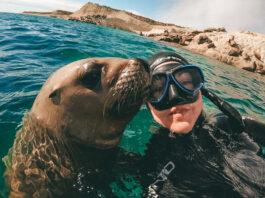 Puerto Madryn snorkeling con lobos portada