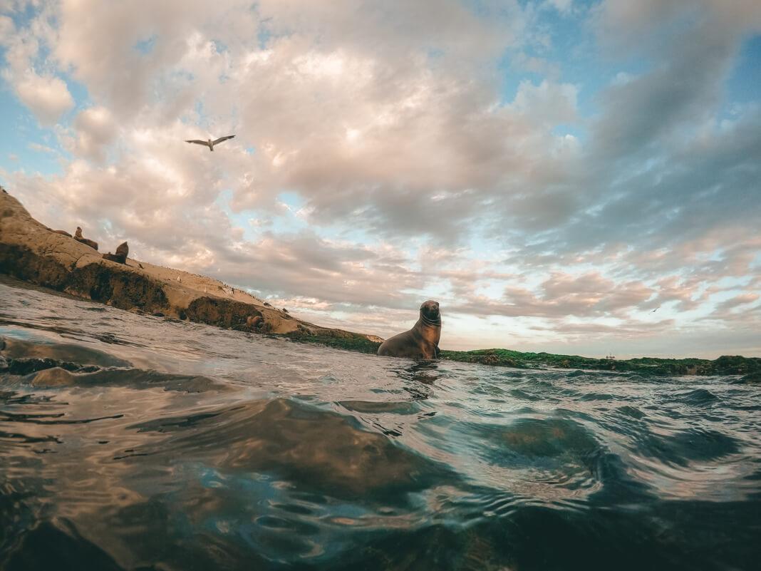 Snorkeling con lobos en Punta Loma.