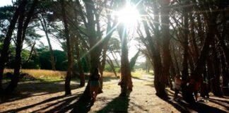 Bosque Energético de Miramar