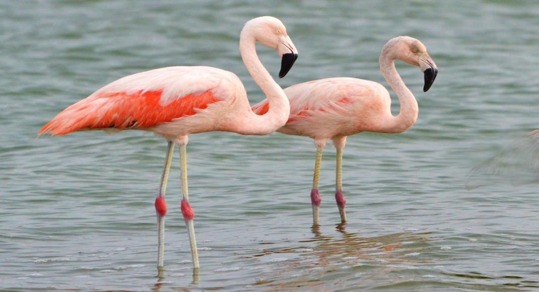 avistaje de aves en Argentina