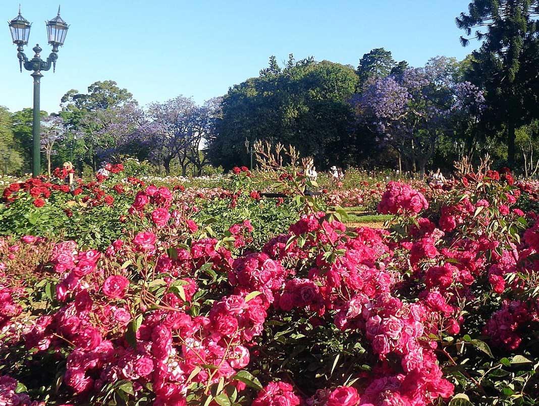 Rosedal en Palermo