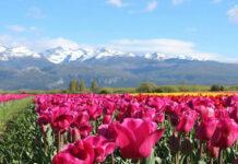 destinos para disfrutar la primavera en Argentina
